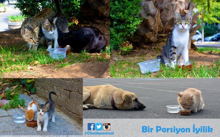 hayvanlar için